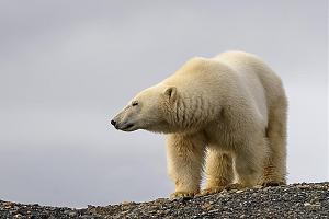 Новый год на полярной станции в Арктике